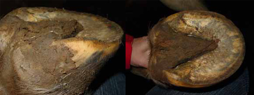 The bottom of the hoof