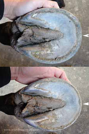 Tall Hoof Sole View