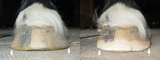 I need to bring weight-bearing in on this hoof.
