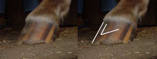 Natural hoof trimming: High heels
